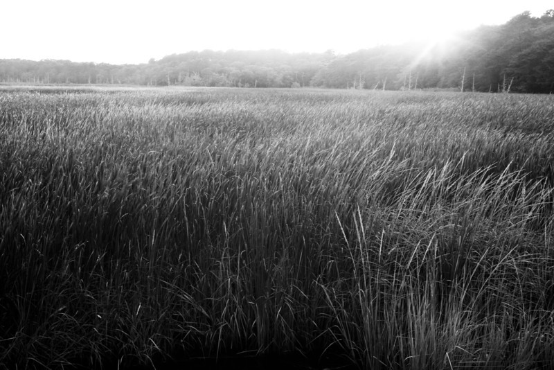 Cape Grass BW.jpg