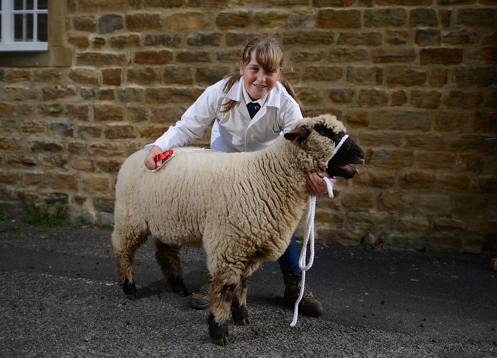 . MASHAM, UNITED KINGDOM - SEPTEMBER 28 Lucy Steele of Withernsea with her champion Oxford Down Gimmer Lamb during the sheep fair in Masham September 28, 2013 in Masham. The fair, celebrating its 25th year, consists of many events over the weekend, including many sheep catagories such as sheep racing, sheepdog demonstrations and fleece stalls. (Photo by Nigel Roddis/Getty Images)