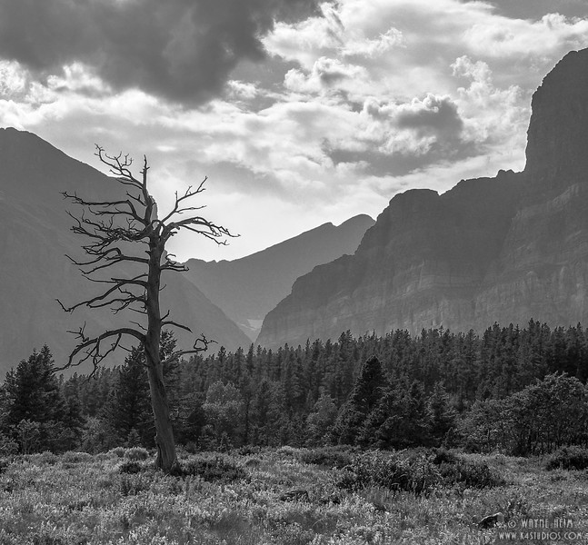 Standing Guard   Black & White Photography by Wayne Heim