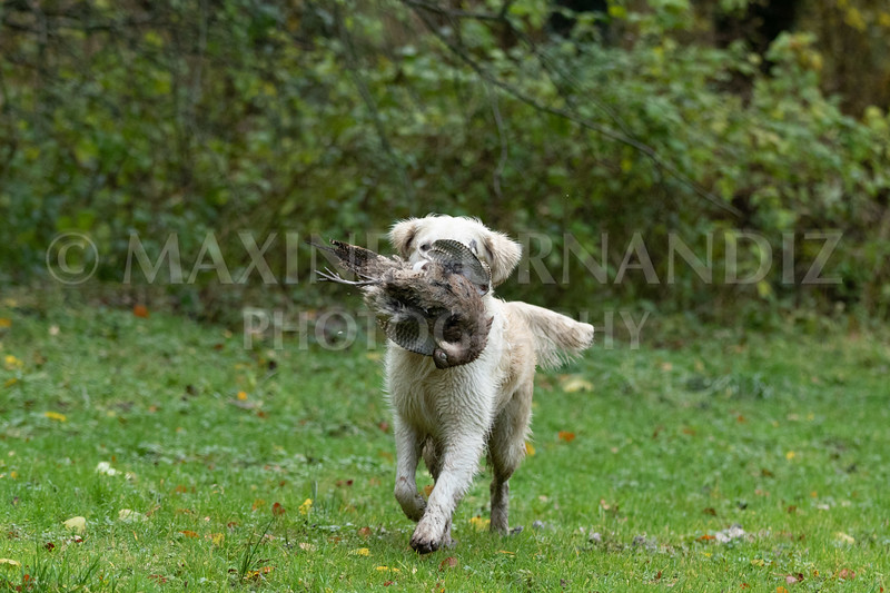 Dogs-4736.jpg