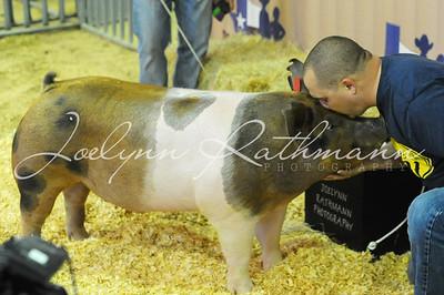 Kiss-a-pig Contest