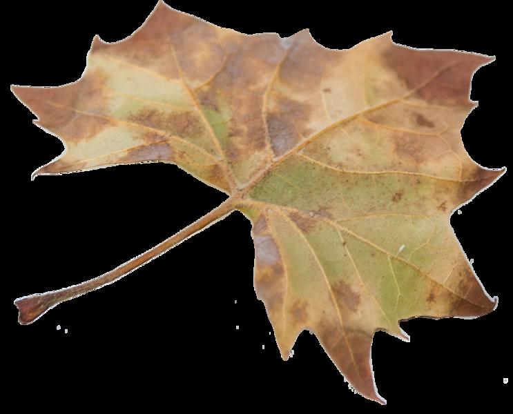 Leaf 22.png