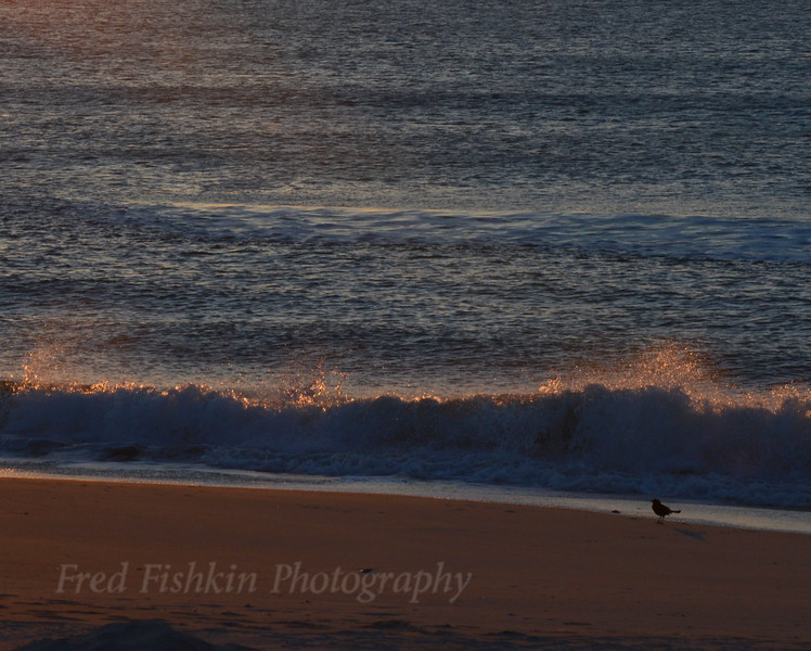 Grackle at dawn 04_30_18.JPG