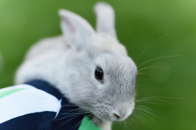 Bunnies and Portraits