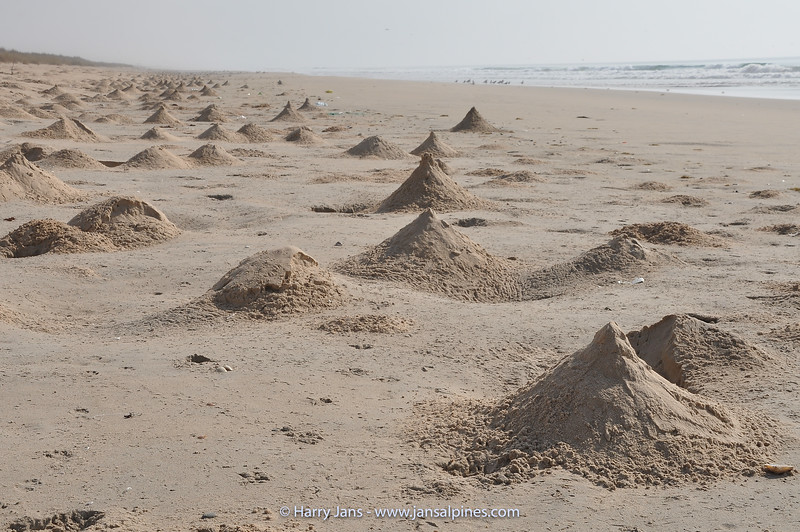 sand hills made by crabs
