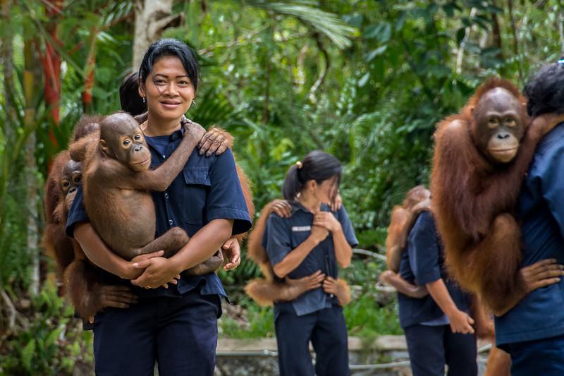 Borneo-2221.jpg