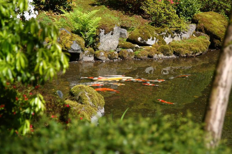 Portland Japanese Garden 6-3-11  1802.jpg