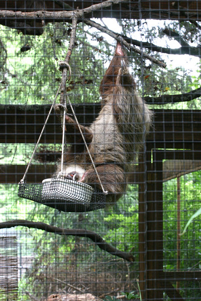 Just Hangin'