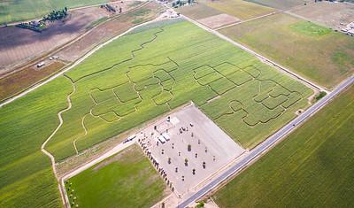 Northern Colorado Corn Maze