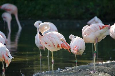 Bronx Zoo - Sep 2014