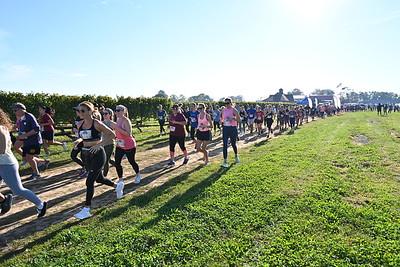 Run the Vineyards Pindar Fall 8K and 5K