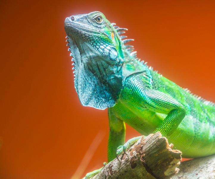 Costa Rica_Reptiles-1.jpg
