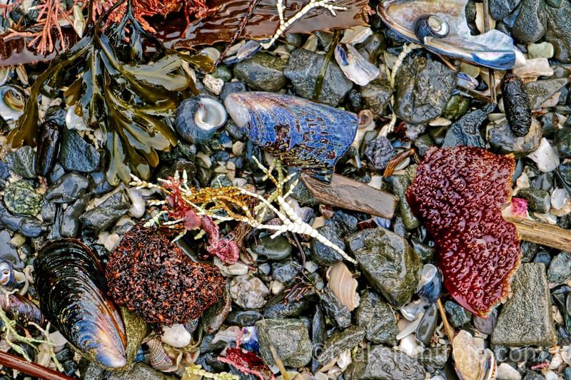 Colourful Beach Debris