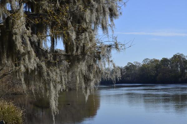 Southern Cypress Swamp 03/16/13