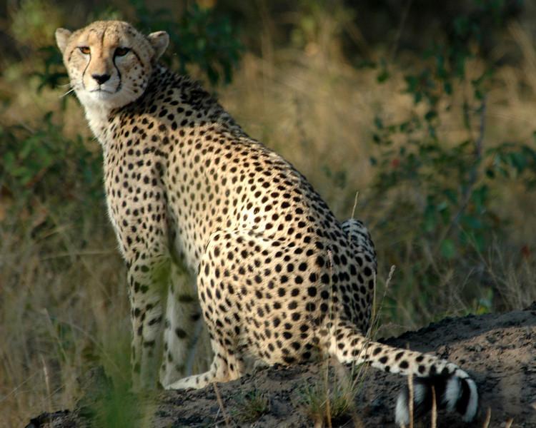 Africa 2005-01.jpg