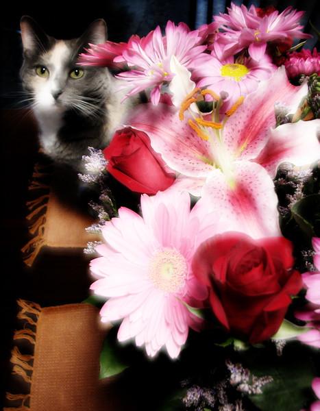 amh Robbins pics (310).jpg
