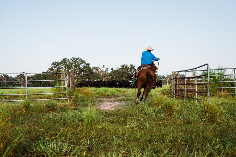 Barthle Cattle-2 (47 of 102).jpg