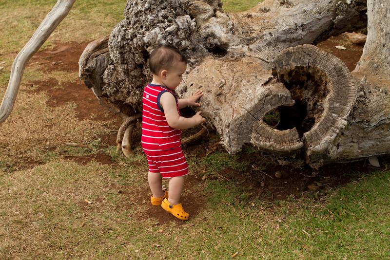 Hawaii2012-376.jpg