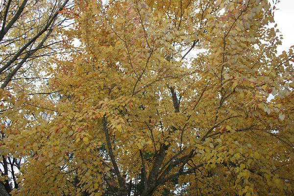 Fall Foliage 2006 @ our Home