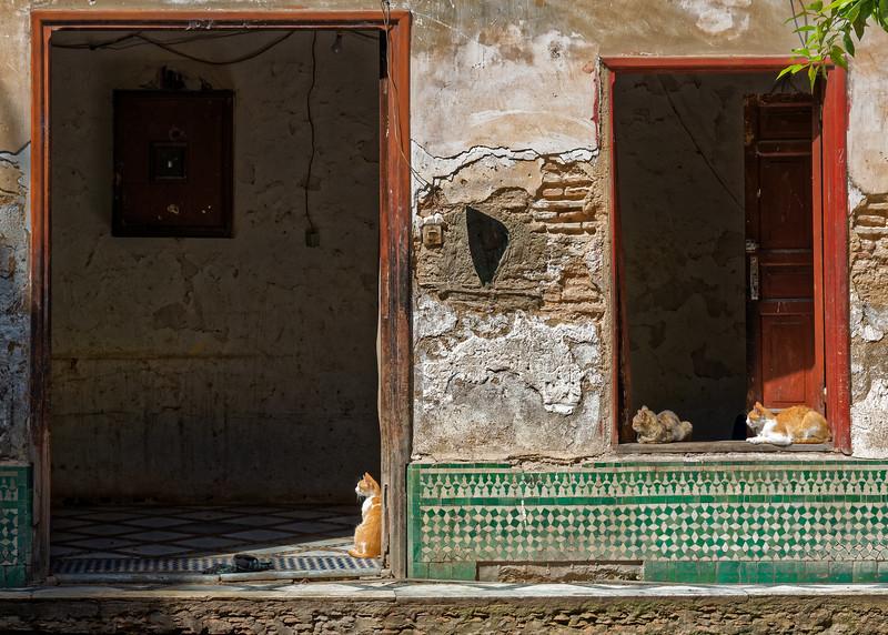 U221 Fes Riad Cats.jpg