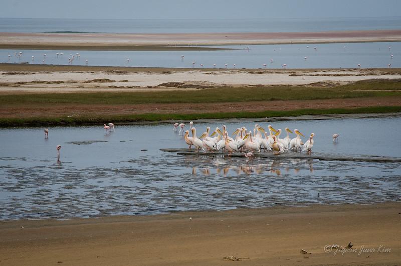 Namibia-5261.jpg