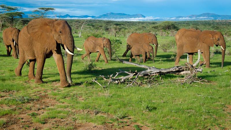Elephants-0202.jpg