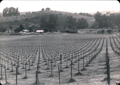 Historic Napa Valley