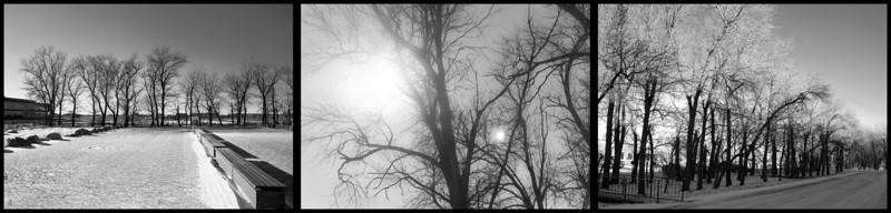 Trees around work