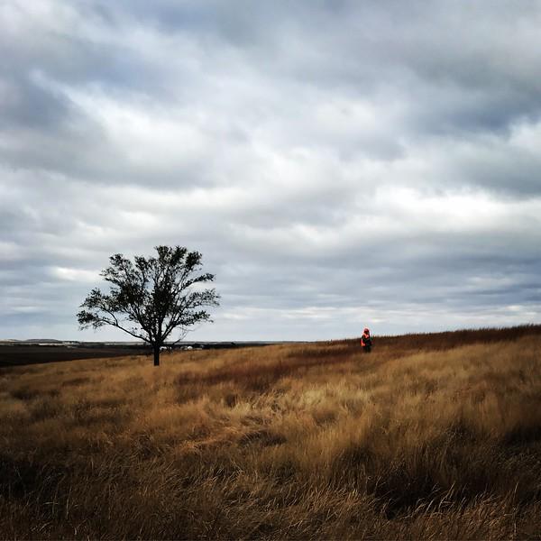 2016 - Kansas Pheasant Hunt