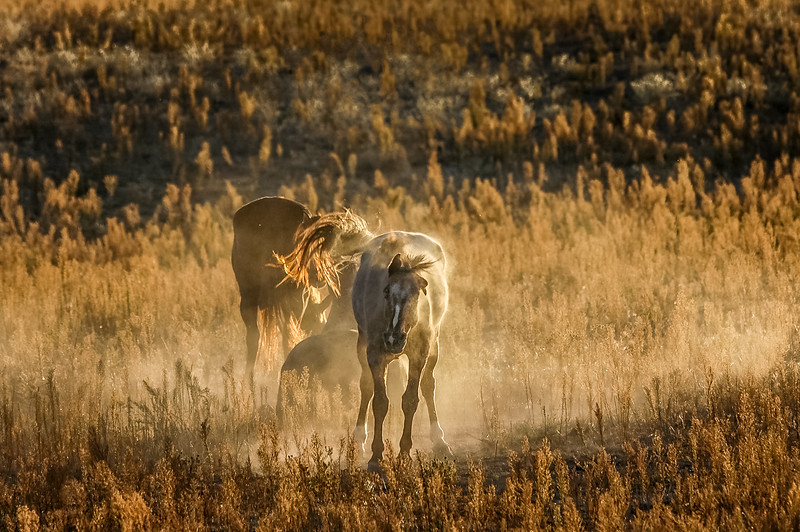 Wild Horse Shaking Off Dust