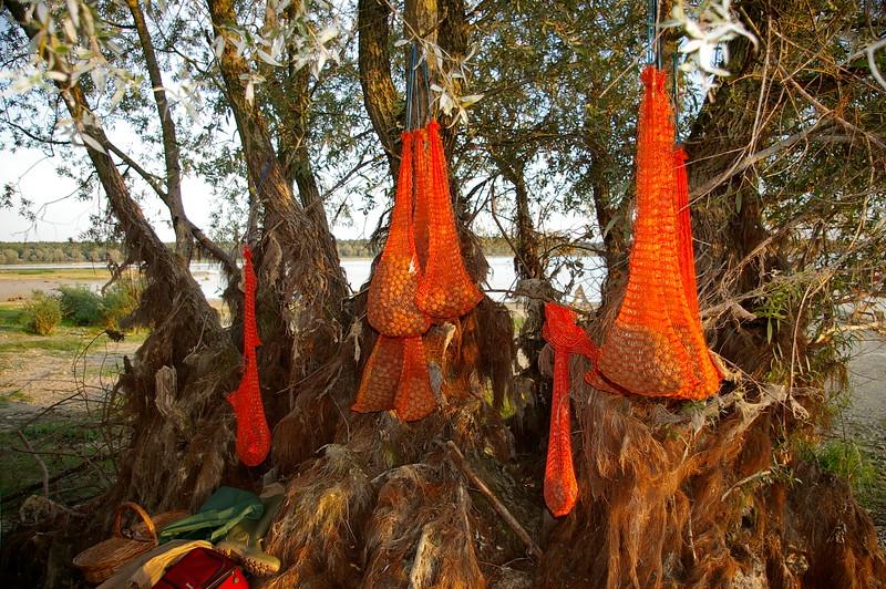 WCC06-przemek-Fruit of Orient's trees