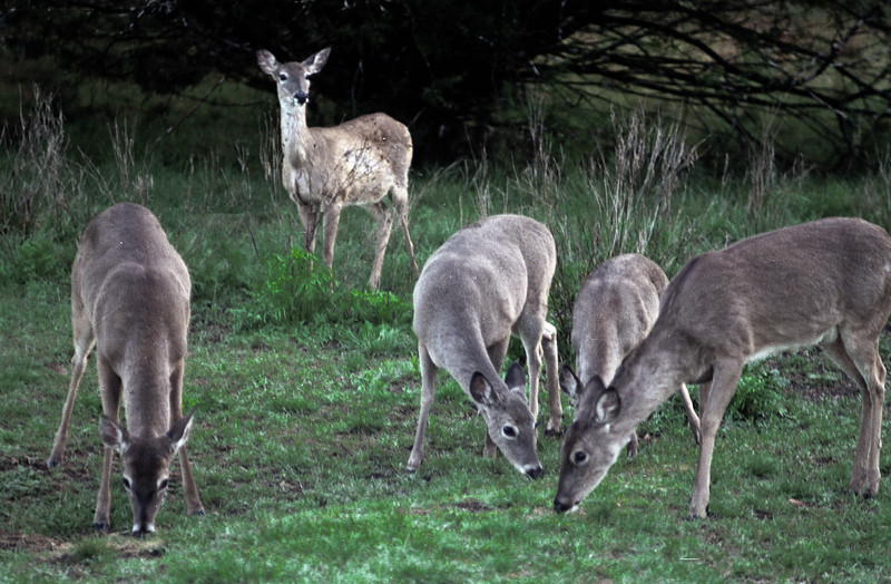 Kerrville State Park