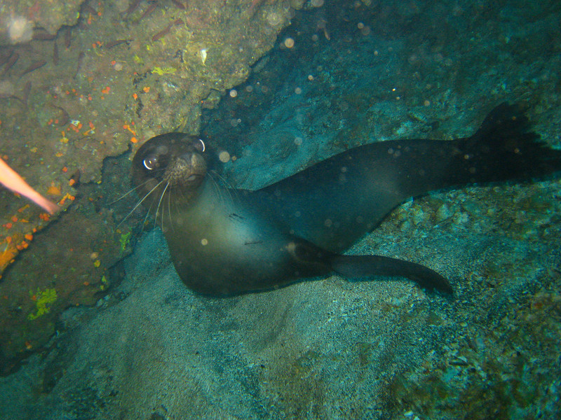 Diving in the Galapagos (365 of 392)