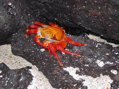 Equador & Galapagos, August 2004