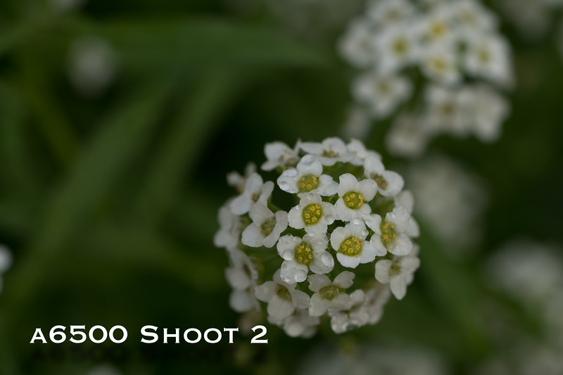 a6500 macro - Shoot 2-1.jpg