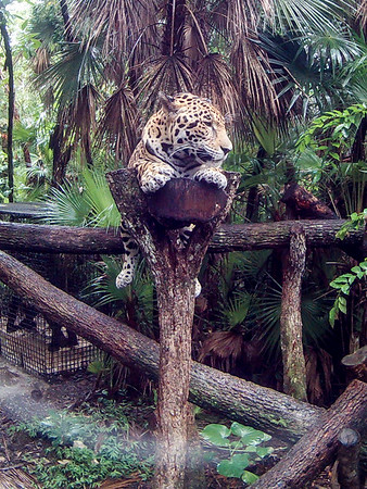 Belize - Excursions - Belize Zoo and Ziplining