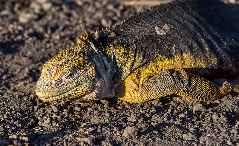 Galapagos_MG_5031.jpg