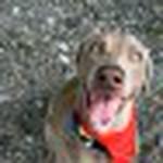 farley pups 096-2.jpg