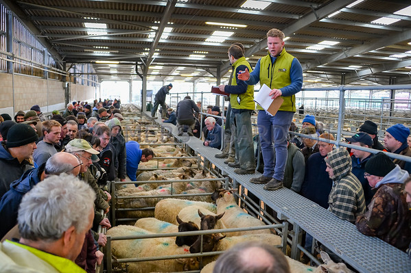 Welshpool Auction Mart February 2018