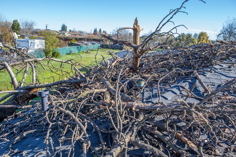 5671 Wallace Ave - Tree 1030am 12 16 2017 Extremly Windy Conditions-64.jpg