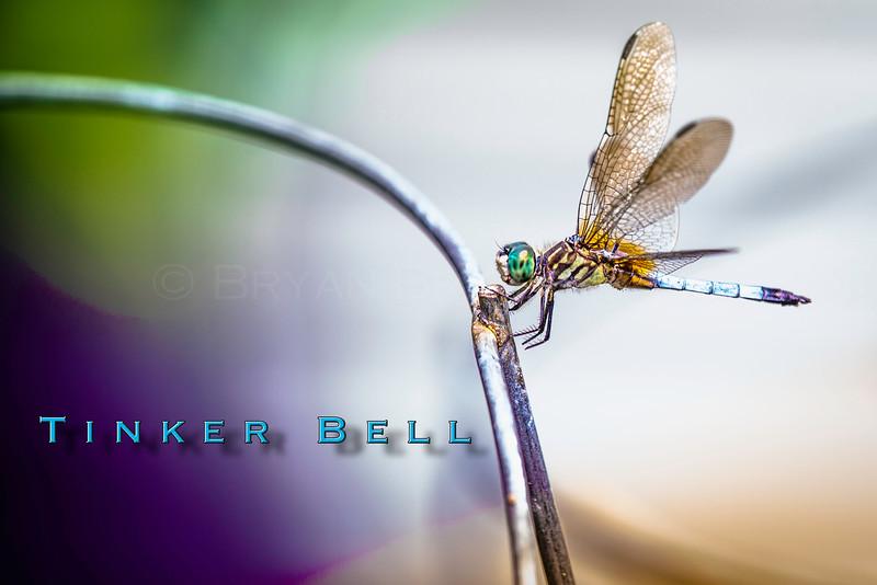 Tinker_Bell_DS.jpg