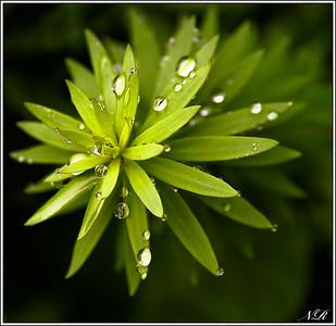 Neil R Garden flower