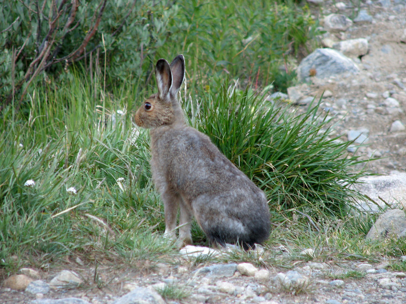 Torreys Peak 7-13-06 009.jpg