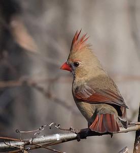 Wildwood Birds lens test