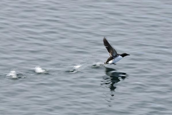 Birds in Svalbard