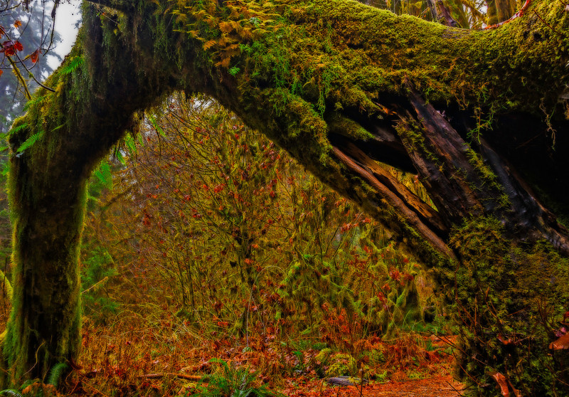 Lichen Arch