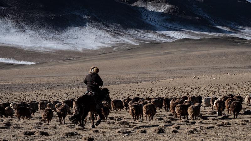 Mongolia - 2020 -4.jpg
