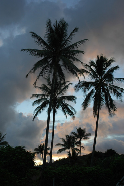 Silhouettes of coconut palm trees against a colorful sunset sky over the ocean