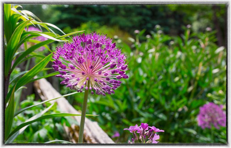 Visit to Whitehouse Perennials Near Almonte