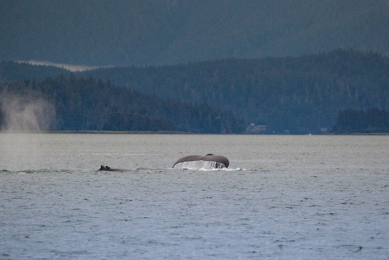 Alaska 2015 - Juneau -  072615-286.jpg